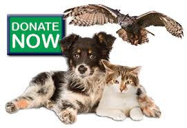 animal shelter donate. Modren Donate Click Here To Donate Now On Animal Shelter Donate E