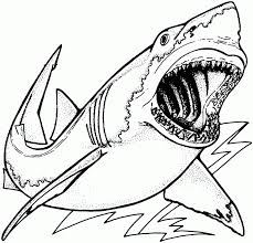 Coloring Pages : Cute Shark Images To Color Coloring Pages Sharks ...