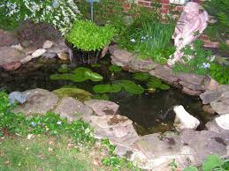 Small Picture Water Garden Ideas Photos Native Garden Design