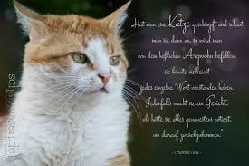 Die Schönsten Katzensprüche Spruchbilder Katzenzitate Weisheiten