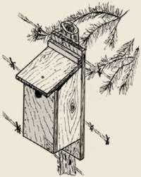 bluebird house plans. Image Of Completed Bluebird House Plans