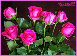 Quotes About Roses And Beauty Best of Beautiful Roses Pic's With Quotes