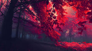 Free download Forest Trees Hd Wallpaper ...
