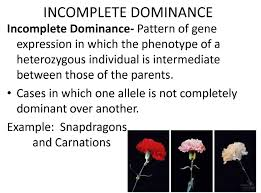 principle of dominance exceptions to the principle of dominance on flowvella