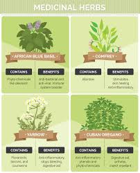 Small Picture Growing Medicinal Herbs and Plants at Home Fixcom