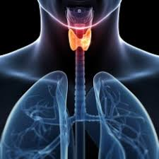 Image result for thyroid picture
