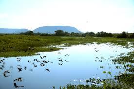 Acquario biotopo: il pantanal terraria
