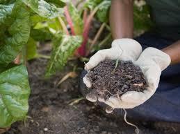 you mix potting soil with garden soil