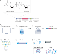 mRNA vaccines for infectious diseases: principles, delivery and clinical  translation | Nature Reviews Drug Discovery