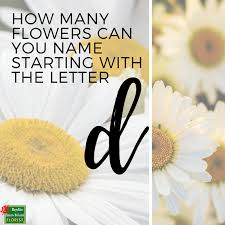 friday fun ment below how many flowers can you name starting with the letter d