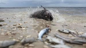 Image result for florida coastline climate change
