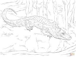 Dessin De Coloriage Alligator Imprimer Cp00768