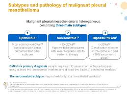 The exact prevalence is unknown but it is estimated that mesotheliomas represent less than 1% of all cancers. Malignant Pleural Mesothelioma This Information Is From An