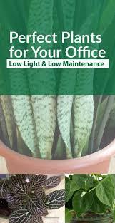 low maintenance office plants. Perfect Plants For The Office Low Maintenance