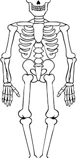 Skeleton Coloring Page Bones Pages Dinosaur Bone Hallow Acnee