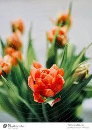 orange blossom tulips bunch of flowers