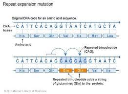 Huntington's Disease Inheritance Pattern