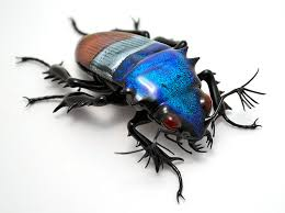 Amazing glass insects by Wesley Fleming - Album on Imgur