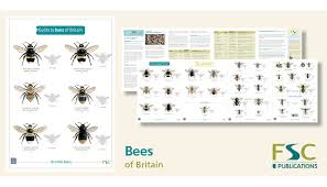 Bee And Wasp Identification Chart Uk Fsc Fold Out Id Chart Bees Identification Guide