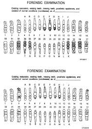 Tooth Position Chart Deciduous Teeth