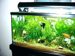 fish tank stand design ideas office aquarium. Small Fish Tank Ideas Aquarium Design For Interior Tropical Full Image Home Stand Office S