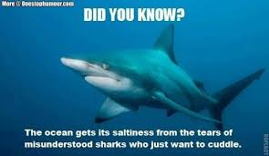 the funniest shark week 2017 memes all in one place shark week 2017 1 jpg
