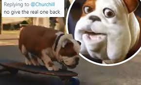 Video of one of the recent churchill adverts. New Churchill Advert Slammed As Nodding Dog Gets A New Look Daily Mail Online