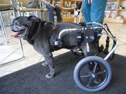 rear support dog wheelchair