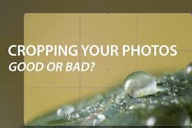 Cropping photography Neglected Cropping Your Photos Good Or Bad Reddit Cropping Your Photos Good Or Bad Discover Digital Photography