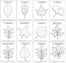 Small Picture Leaf Coloring Pages Leaves Learning and Montessori