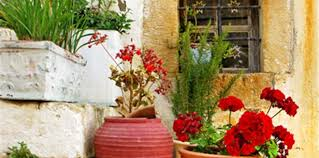 Small Picture Mediterranean garden Plant Guide Lifestyle HOME