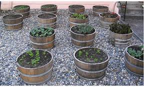 barrel garden. Wine Barrels Are A Great Option To Building Your Own Container Gardens. They\u0027re Barrel Garden B