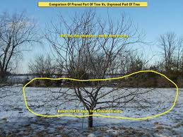 Pruning Faqu0027s  A Way To GardenCan You Prune Fruit Trees In The Summer