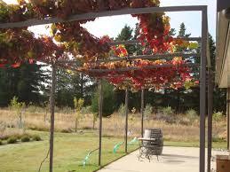 Grape Vine Pergola For Pergola 9th April 2012 Nice Autumn Colour Red Grape  And Modern Design Elegant Item Create Unique