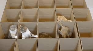 cat cardboard box maze