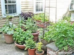Kitchen Gardening For Beginners Gardening Advice