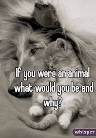 If You Were An Animal What Would You Be Kayas