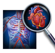 the circulatory system the circulatory system biology questions and answers