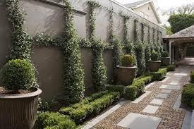 garden design climbing plants