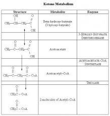Carbohydrate Metabolism Chart Disorders Of Carbohydrate Metabolism Overview