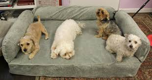national pet day snoozer pet products