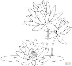 Water Lilies Coloring Page From Water