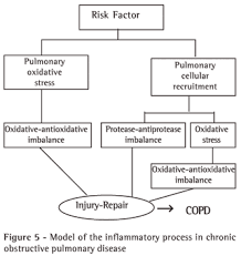 Pathophysiology Of Emphysema Flow Chart Cellular And Biochemical Bases Of Chronic Obstructive