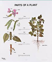 1099 Parts Of A Plant