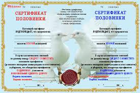 шуточные сертификаты Самое интересное в блогах 700 Диплом 2 половинки голуби 700x467 391kb
