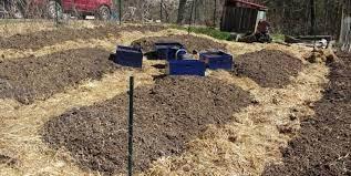 an organic vegetable garden