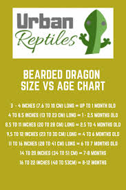 Bearded Dragon Lifespan How Long Does A Bearded Dragon Live