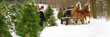 CTFO Christmas Tree Farmers of Ontario - Guide to Christmas Tree Wholesale  Sources