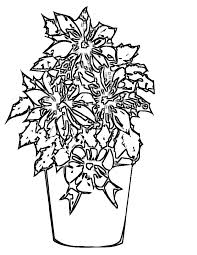 Click the poinsettia flower coloring pages to view printable version or color it online (compatible with ipad and android tablets). Free Printable Poinsettia Coloring Pages For Kids