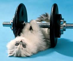 Image result for image of someone lifting weights